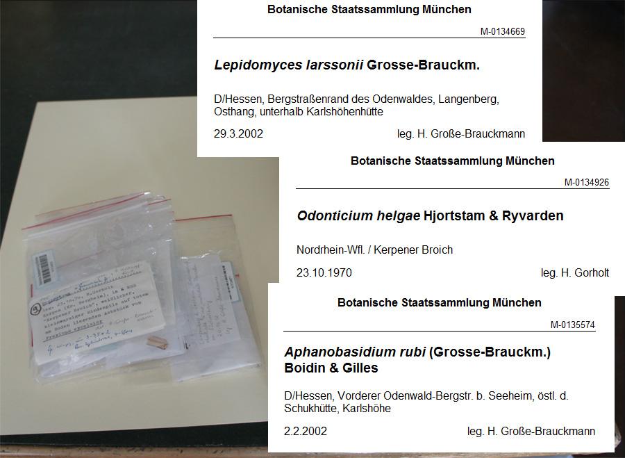 Sammlung Große Braukmann