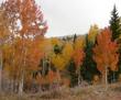 Treediversity