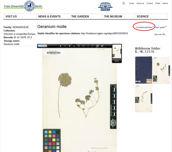 Virtuelles-Herbarium-Berolinense